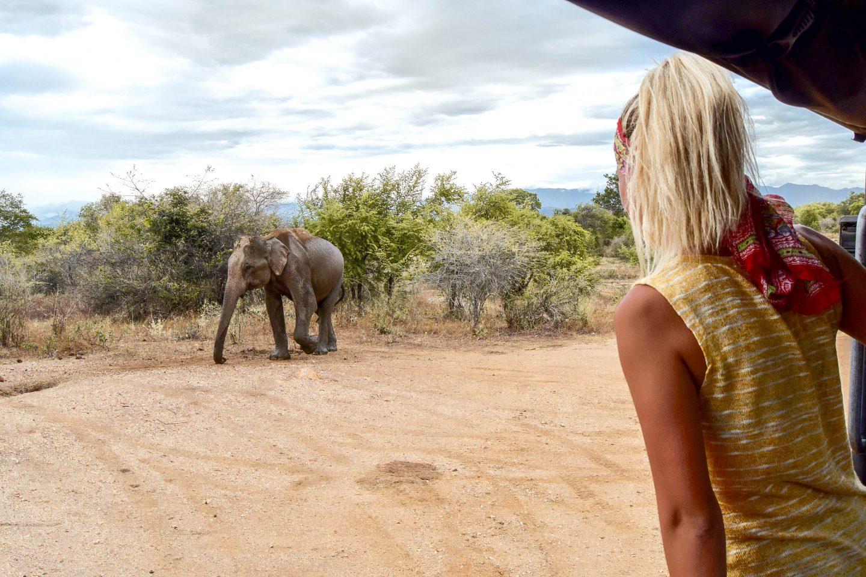 Udawalawe Safari – The Best Sri Lanka Safari