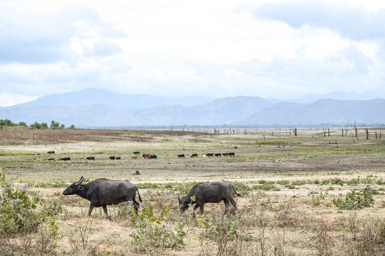 Udawalawe National Park Safari In Sri Lanka Safari