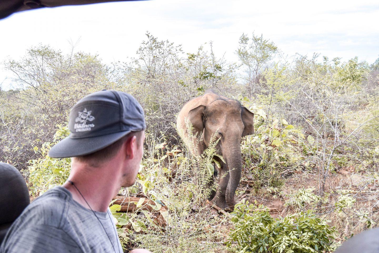 Udawalawe Safari In Sri Lanka Safari