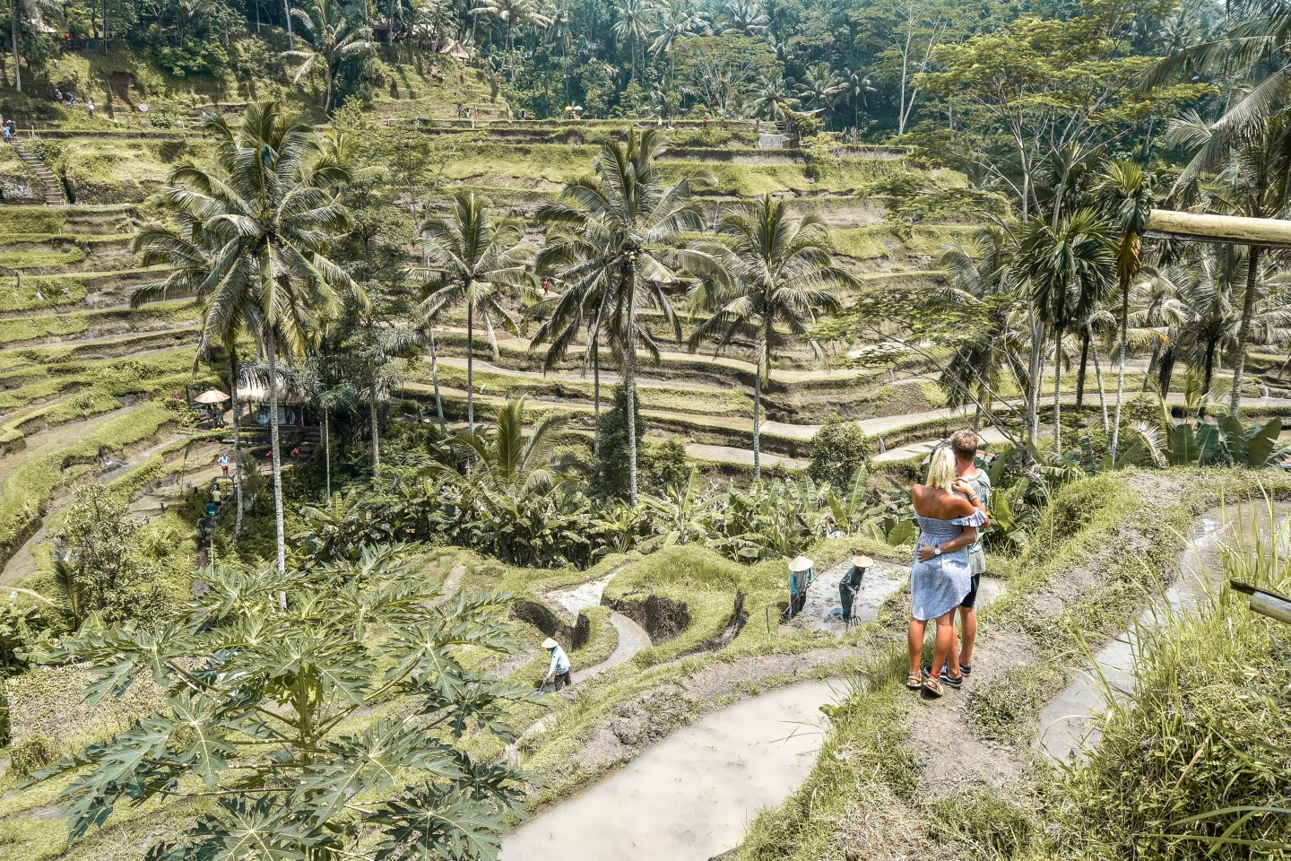 Tegalalang Rice Terrace Bali Things To Do In Ubud