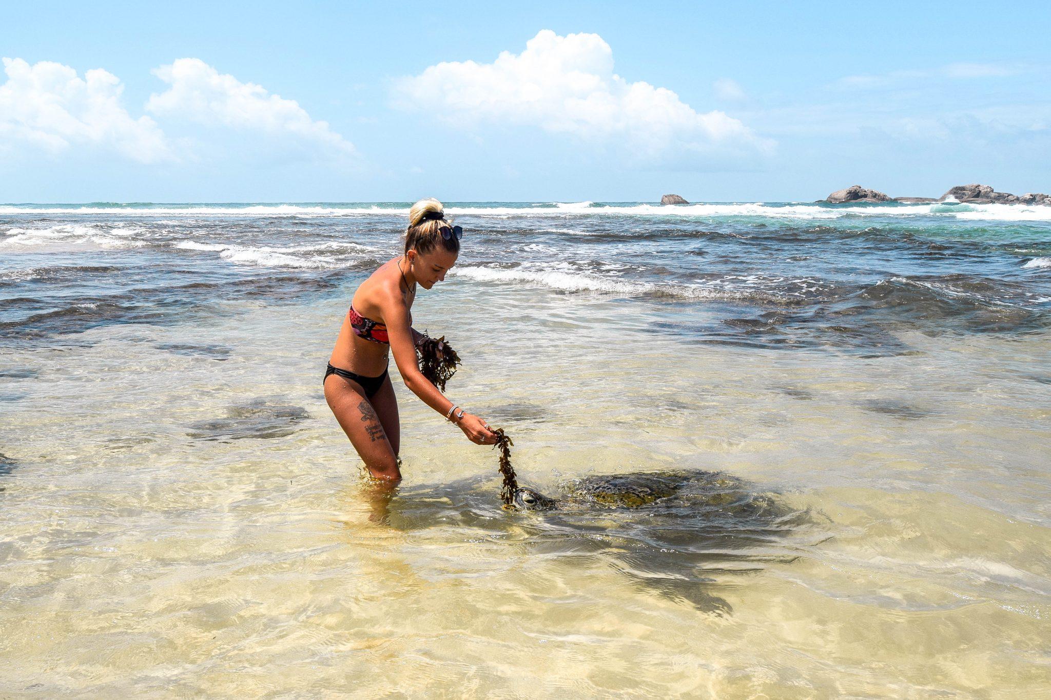 Wanderers & Warriors - Charlie & Lauren UK Travel Couple - Wild Hikkaduwa Turtles & Where To Find Them - Hikkaduwa Beach Sri Lanka