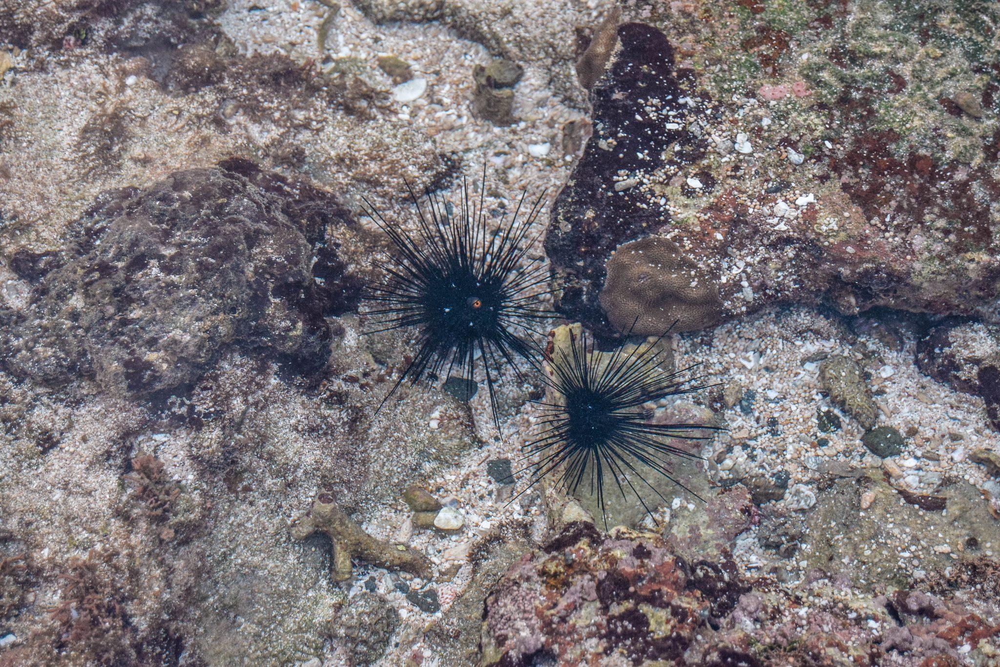 Wanderers & Warriors - Pantai Semeti Beach Lombok Sea Urchins