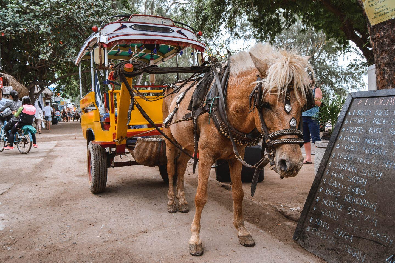 Horses Gili Trawangan Things To Do On Gili Trawangan Things To Do Gili Islands