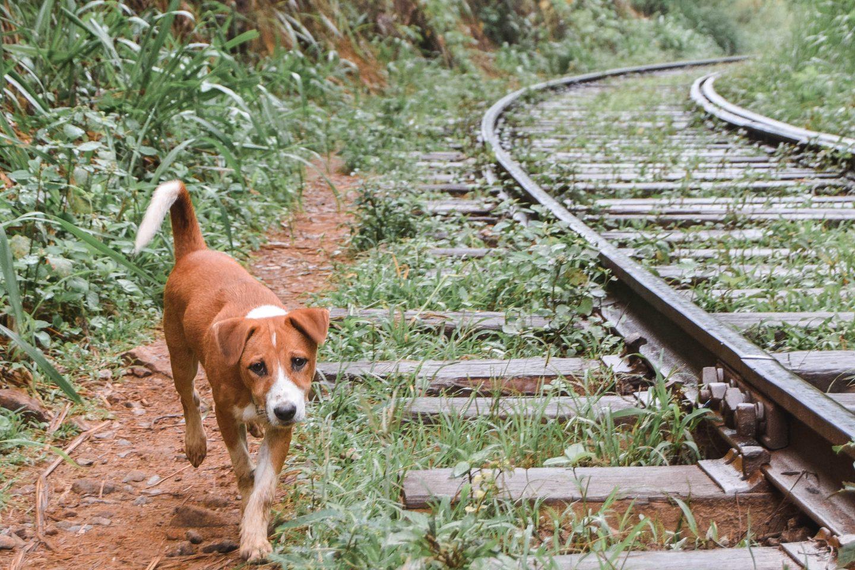 Railway Ella Rock Sri Lanka Ella Rock Hike