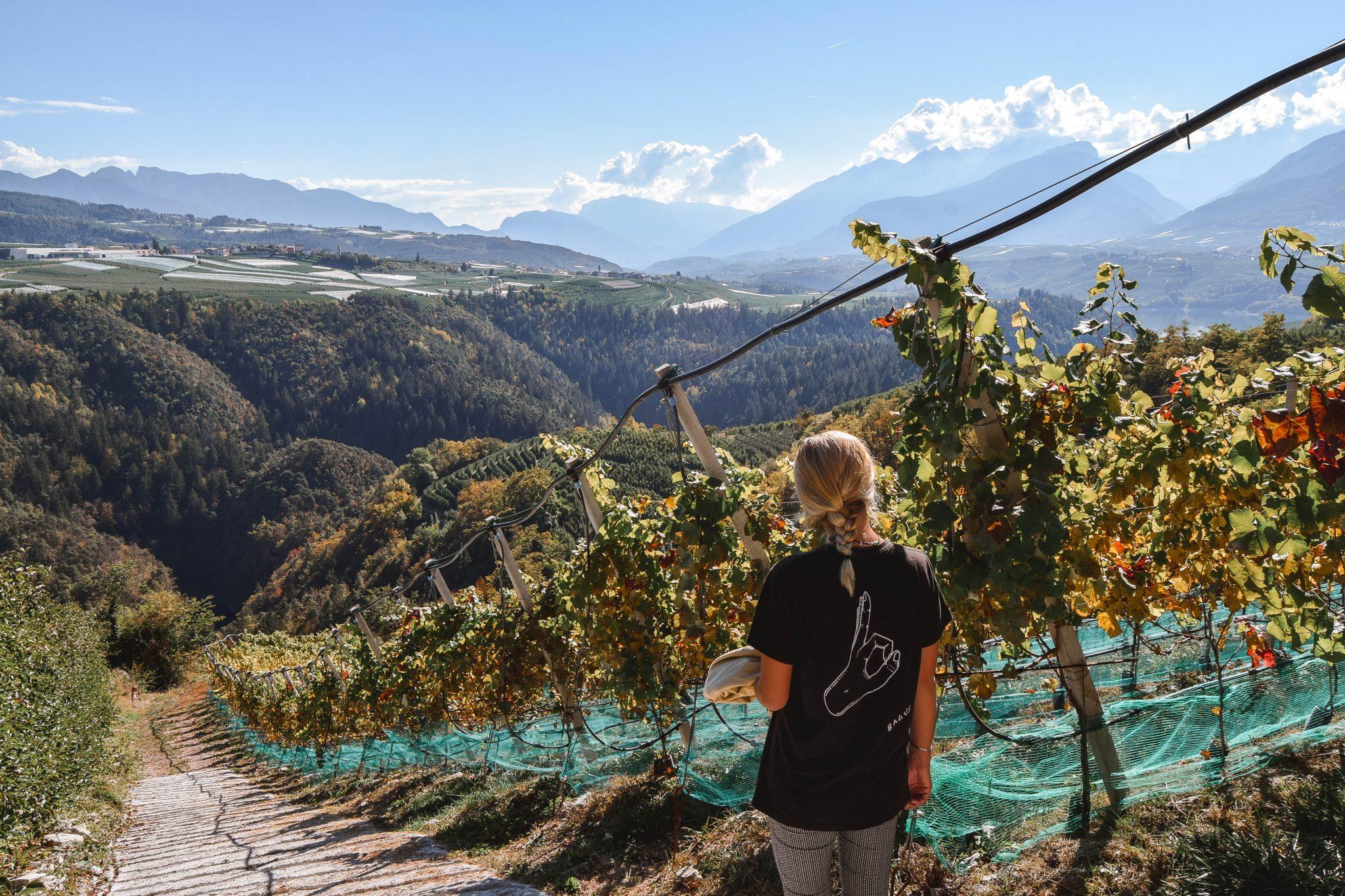 Wanderers & Warriors - Charlie & Lauren UK Travel Couple - Things To Do In Val Di Non Trentino - Wine tasting Trentino