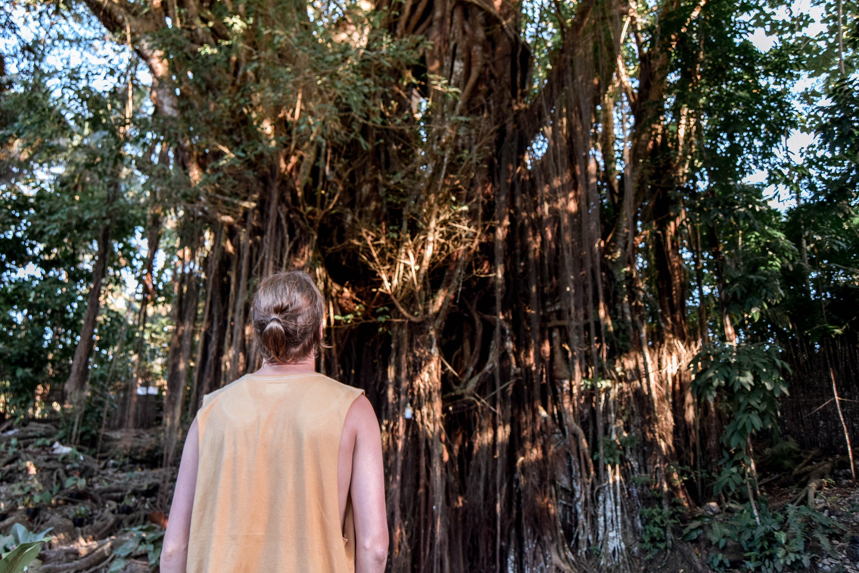 Century Old Balete Tree Siquijor Tourist Spots