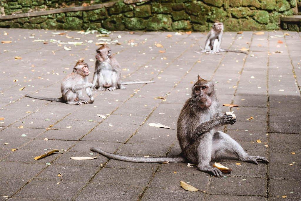 Ubud Monkey Forest Bali Monkey Forest Ubud Sacred Monkey Forest Sanctuary