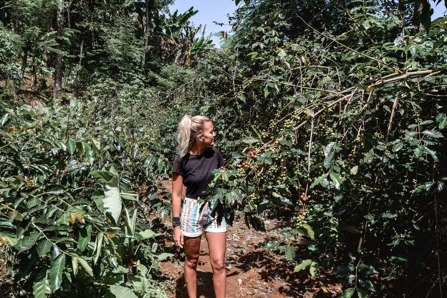 Bali Coffee Plantation Munduk Moding Plantation Coffee Bali Bucket List