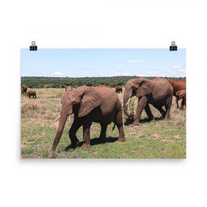 elephant print elephant photography elephant photo elephant picture