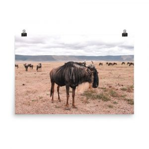 wildebeest print wildebeest photography wildebeest photo wildebeest picture